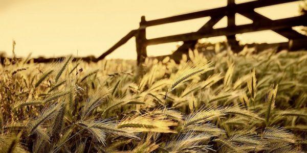 کشاورزی صفحه اصلی